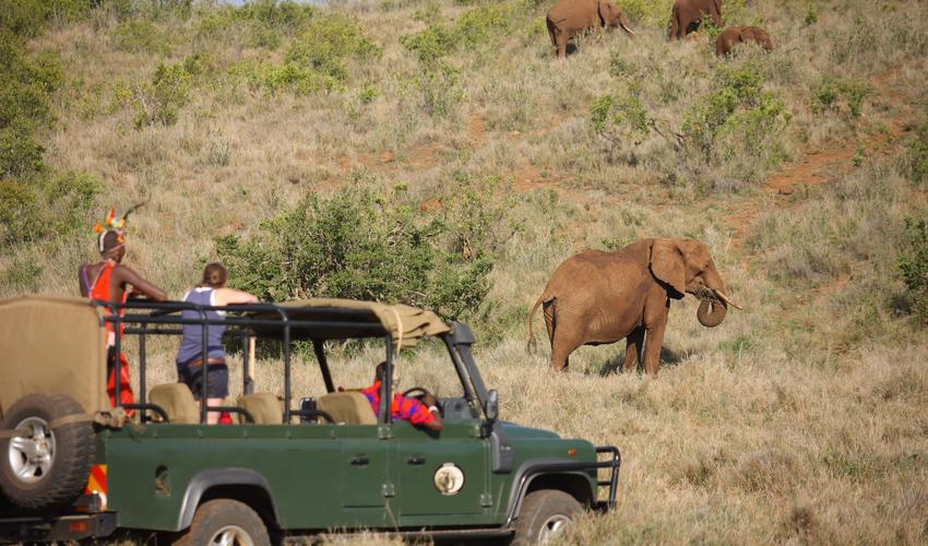 Game Drives on Lewa Wildlife Conservancy give you access to one of the world's best known conservation areas. Elephants are prolific and spending time with these majestic creatures is a privilege.