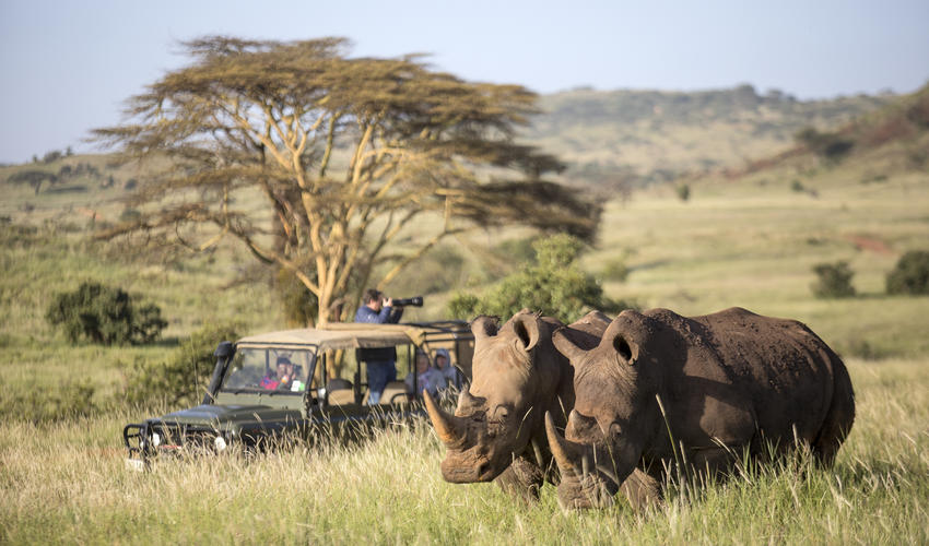 Amazing game drives with incredible rhino interaction