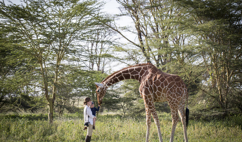 Nditu spends most days in the 2000 acre acacia forest behind the lodge, where she roams and browses freely