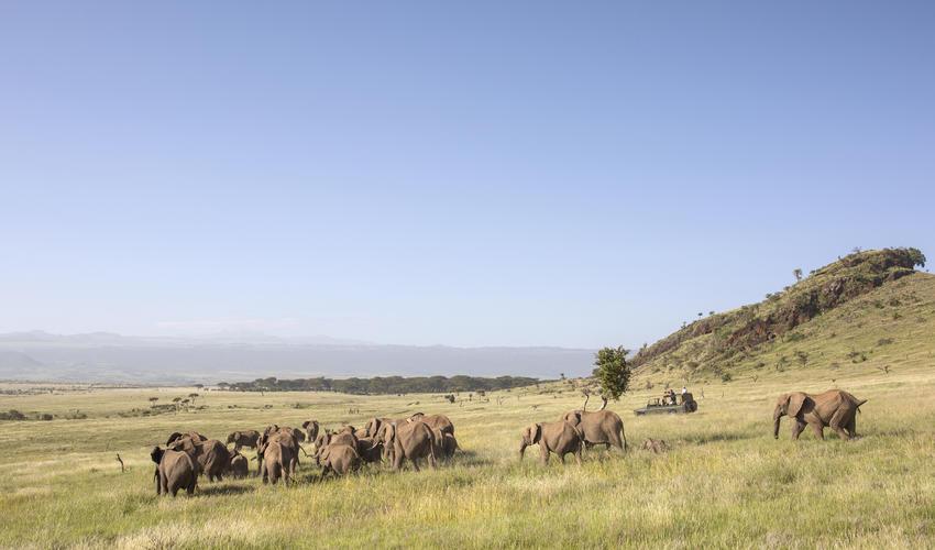 Amazing wildlife sightings at Sirikoi