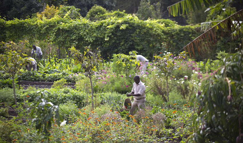 The prolific 1 acre vegetable garden at Sirikoi with over 80 different fruits, vegetable and herbs that supply the kitchen