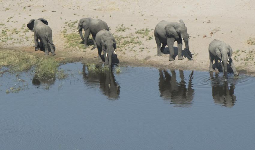 elephants from the Sky