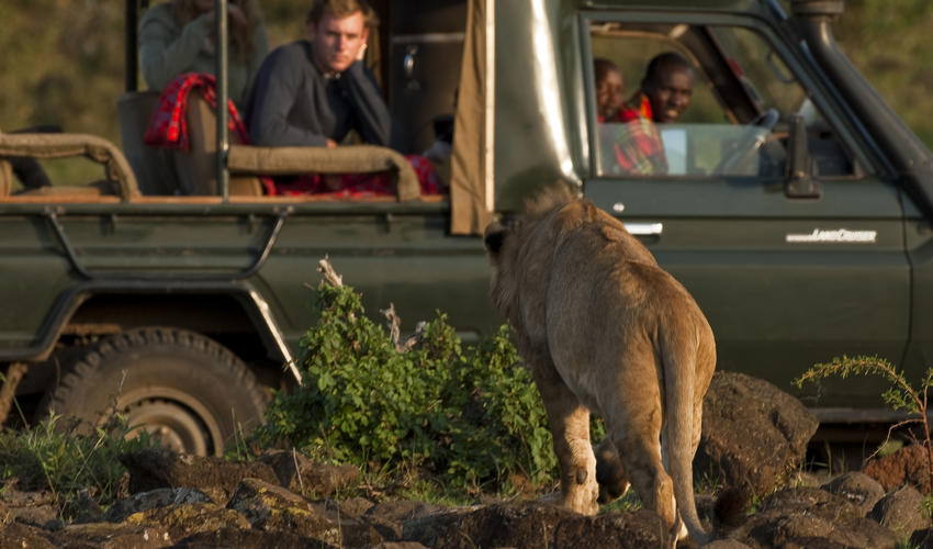 Being in the Mara North Conservancy means we can get quite close to our pride.