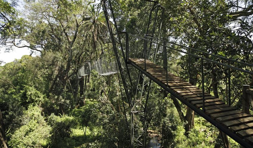 Canopy Walk - Ngare Ndare Forest