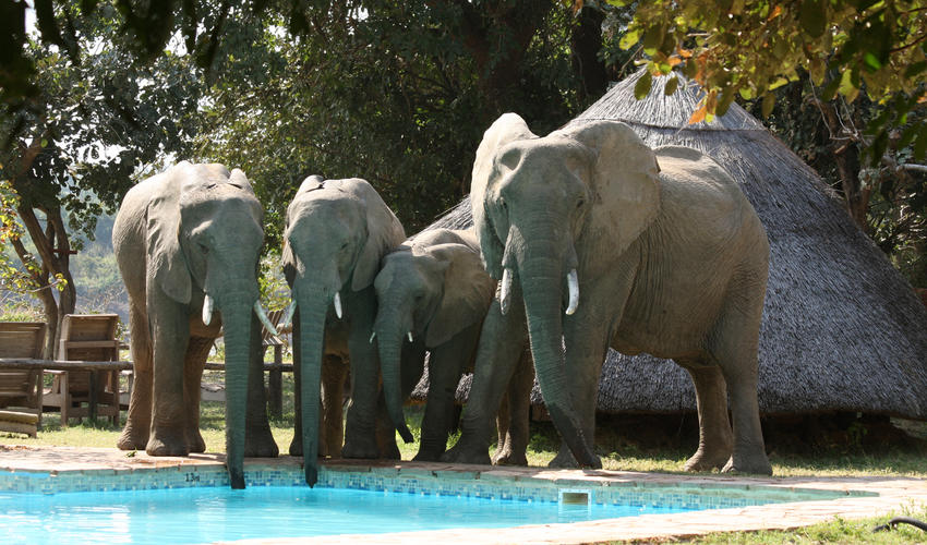 There is plenty of wildlife in and around the camp including the elephant who pass through most days