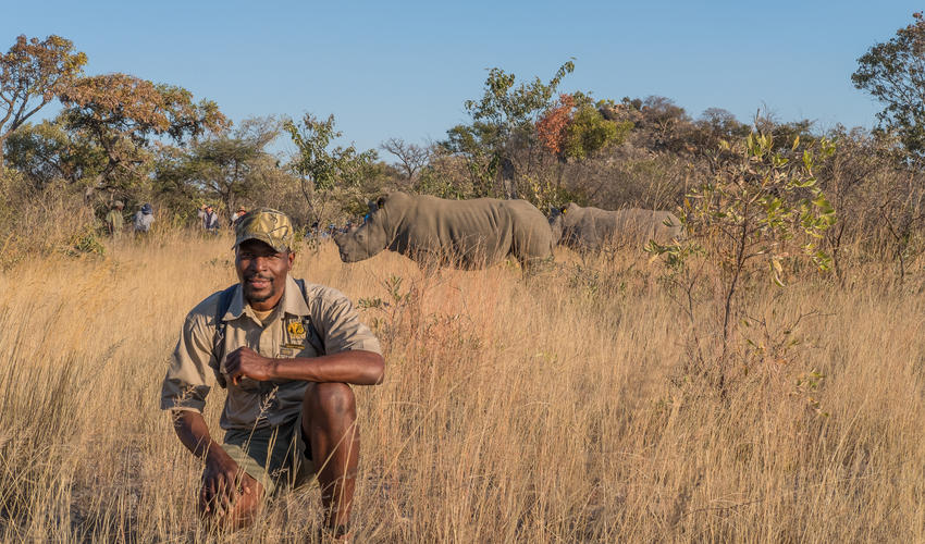 Our qualified guides take guests on foot to see the rare white rhino in the Matobo National Park