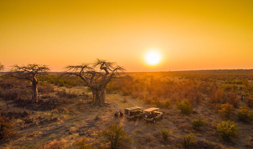 Sundowners at the Baobab