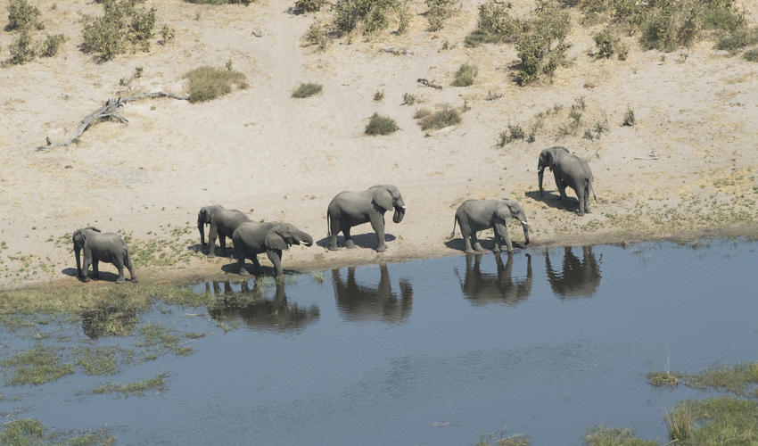 Elephant from helicopter