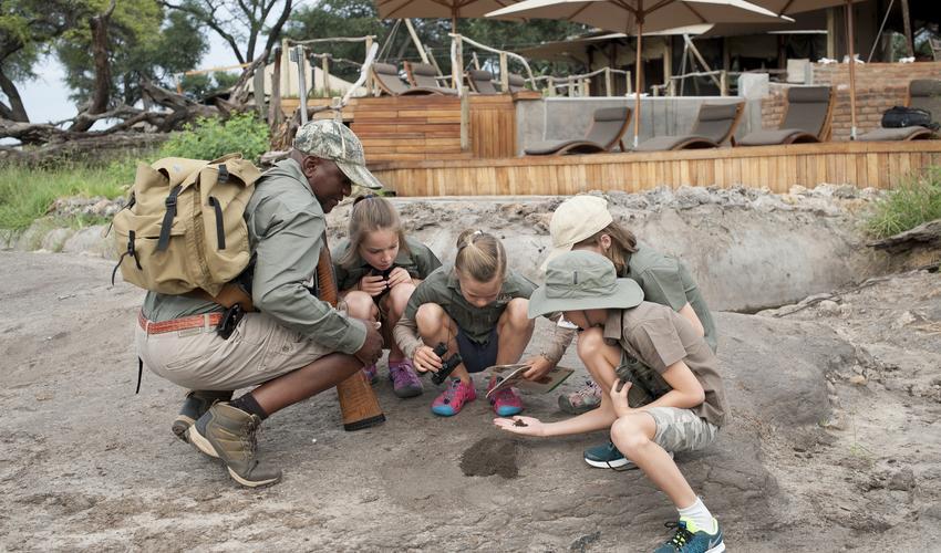 Learning on Safari