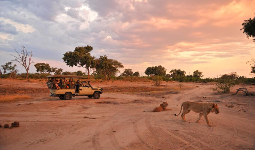 Game Drive with children