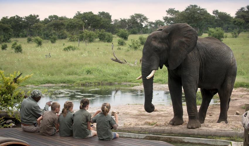 The Elephant Experience at Somalisa Acacia