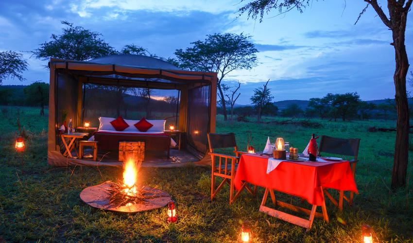 A night away in the bush, for you to hear the wildlife noises all around you with wildlife undisturbed by your presence.