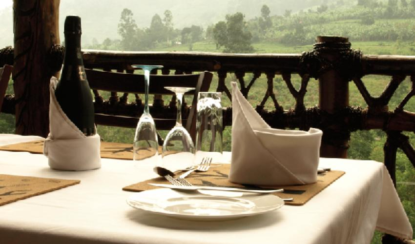 Eat and drink on the terrace overlooking the river and forest