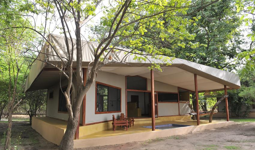 External view of Safari Tent