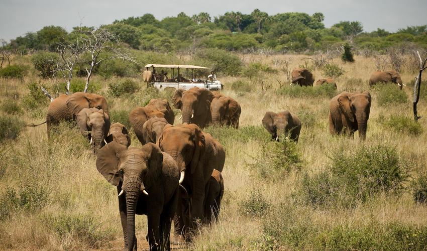 Elephant herd in Madikwe