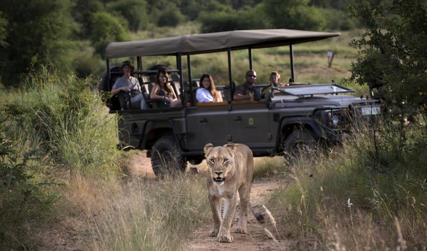 Discover the African bush with your own private vehicle