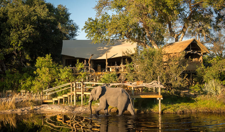 Elephant inspection