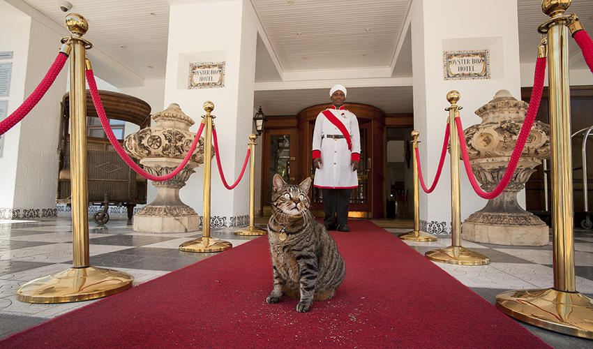 Hotel Resident Cat