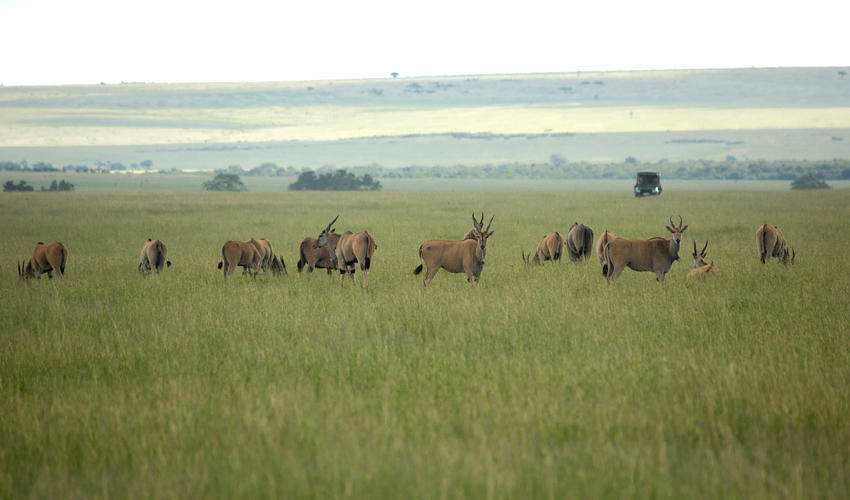 Wildlife Drive from Mara Expedition Cam