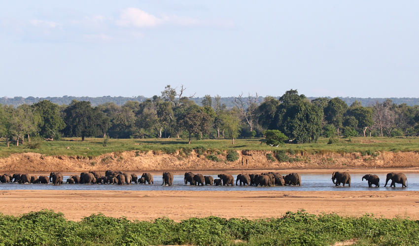 Elephant herds crossing Runde in front of Chilo Gorge Tented Camp