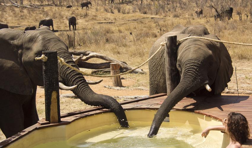 Amazing elephant experiences whilst overlooking the Khulu waterhole