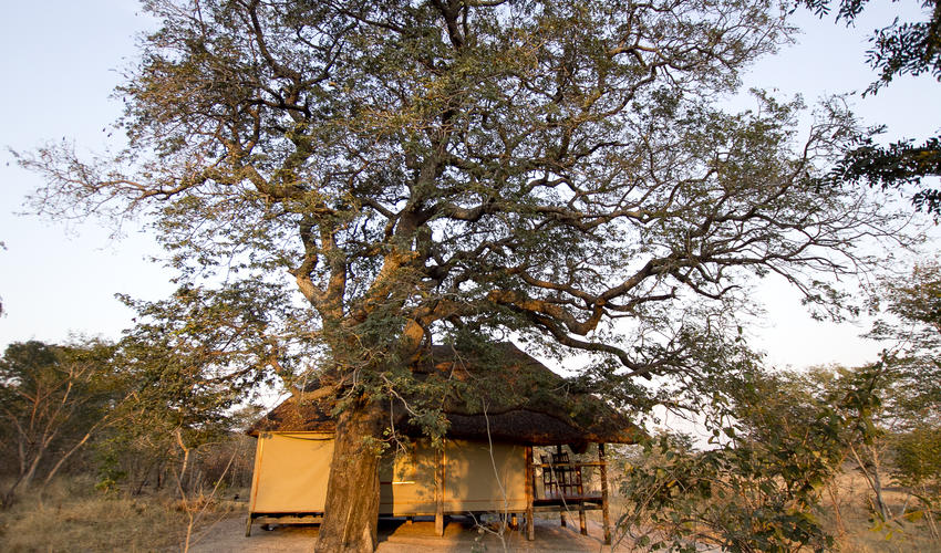 Suites have been built with minimal impact to the surrounding environment and gives guests the feel of wild Africa