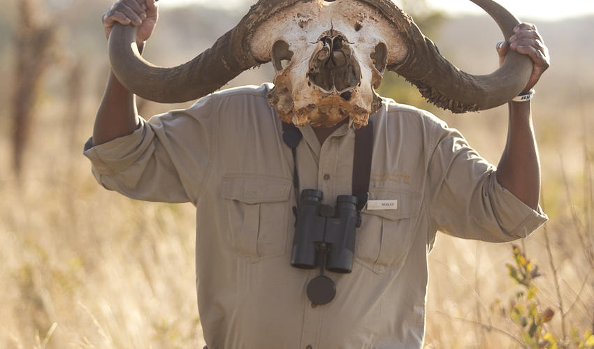 A much loved and sought after legend of Hwange - Dardley, the professional guide at Khulu