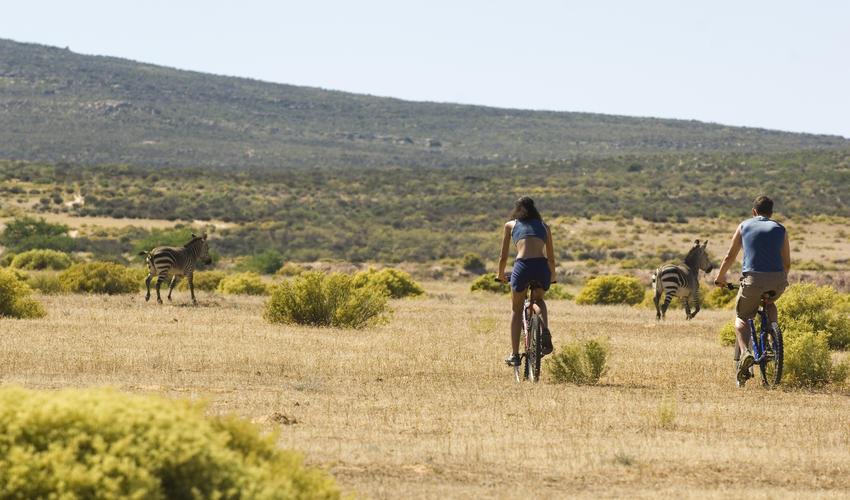 Mountain biking in the Reserve