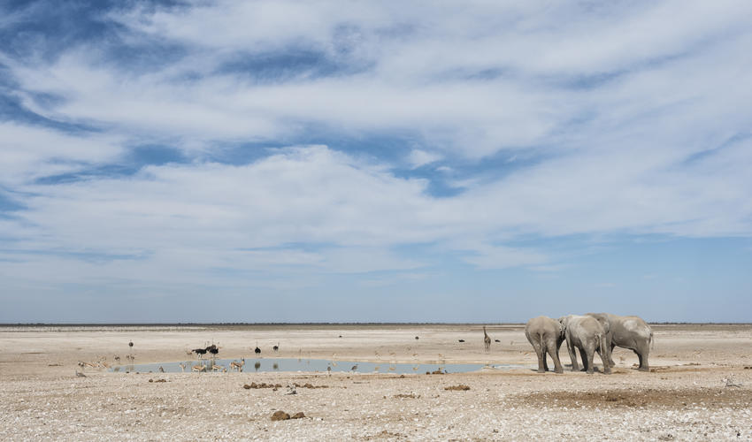 Etosha National Park game drive