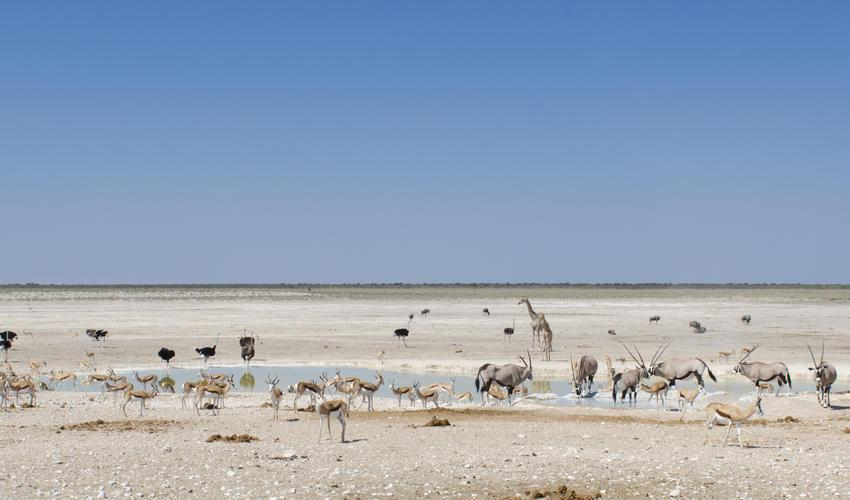 Wildlife experience in Etosha National Park
