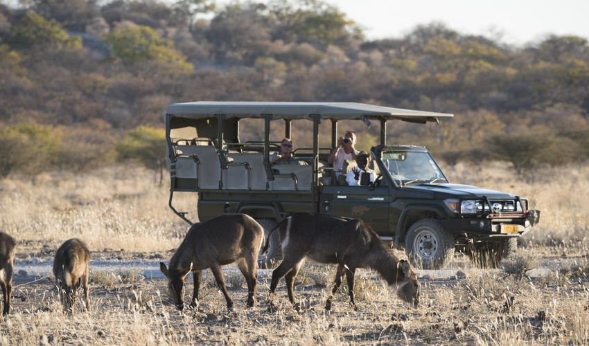 Wildlife experience on the Ongava Game Reserve