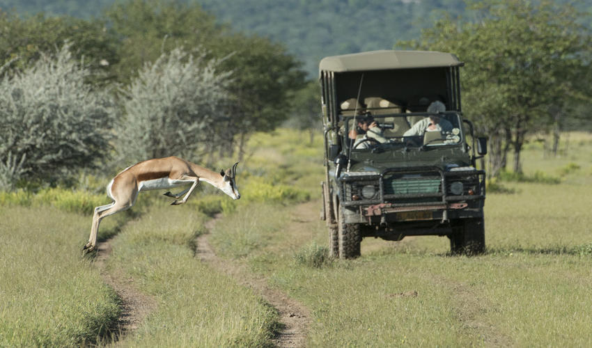 Wildlife experience on the private Ongava Game Reserve - Green Season