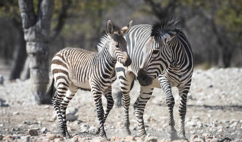 Wildlife experience on the Etosha National Park