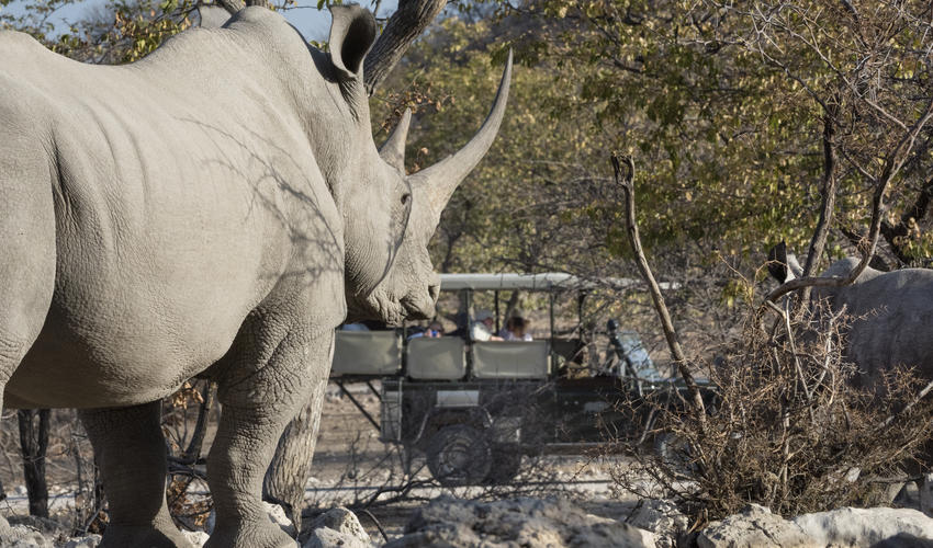Wildlife experience on the private Ongava Game Reserve