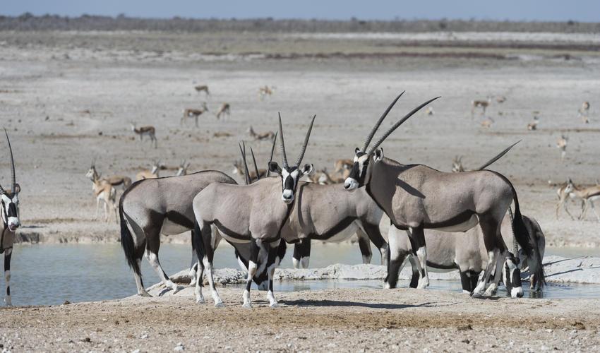 Game drive in Etosha National Park