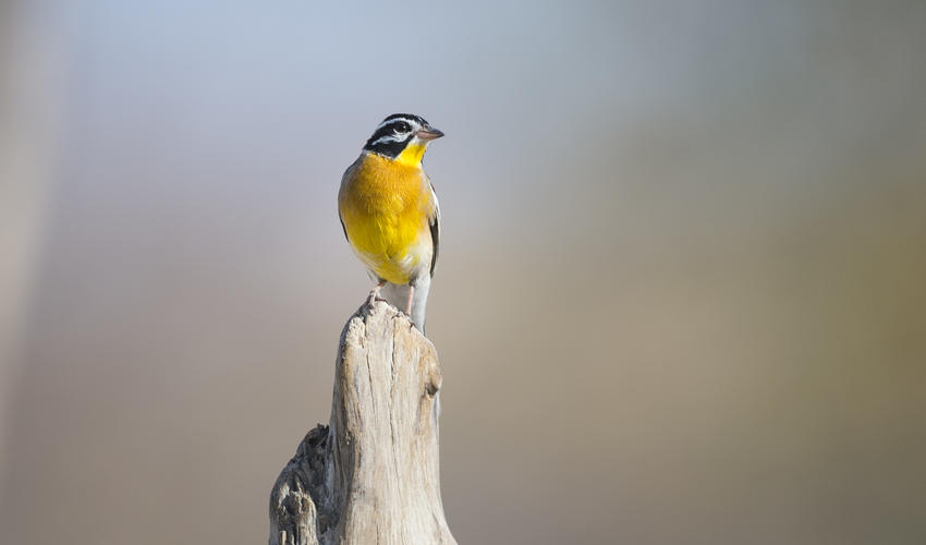 Prolific birdlife on the private Ongava Game Reserve