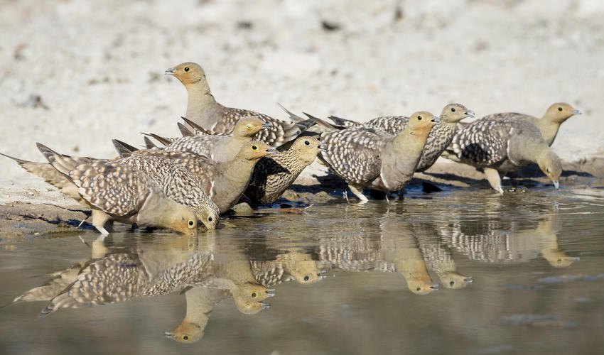 Prolific birdlife on the private Ongava Game Reserve, Andersson's Camp waterhole