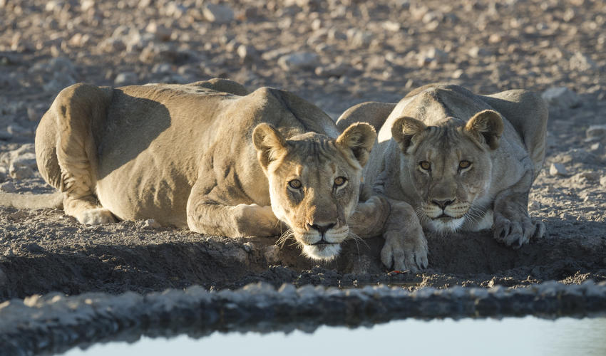 Wildlife on the Ongava Game Reserve, Andersson's Camp waterhole
