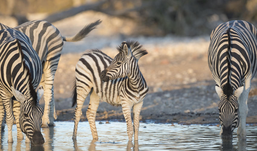 Wildlife on the Ongava Game Reserve