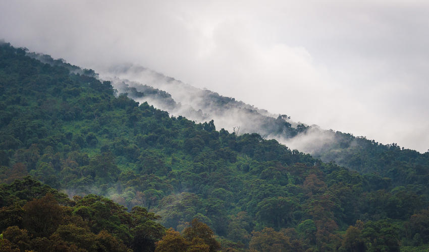 The volcanoes of north-western Rwanda are often shrouded in mist or cloud