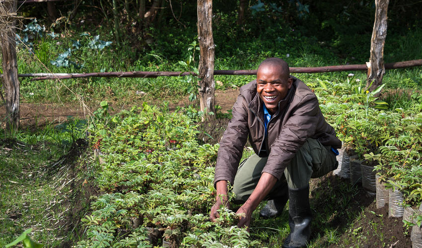 Bisate's tree nursery propagates saplings for the lodge's visionary reforestation project
