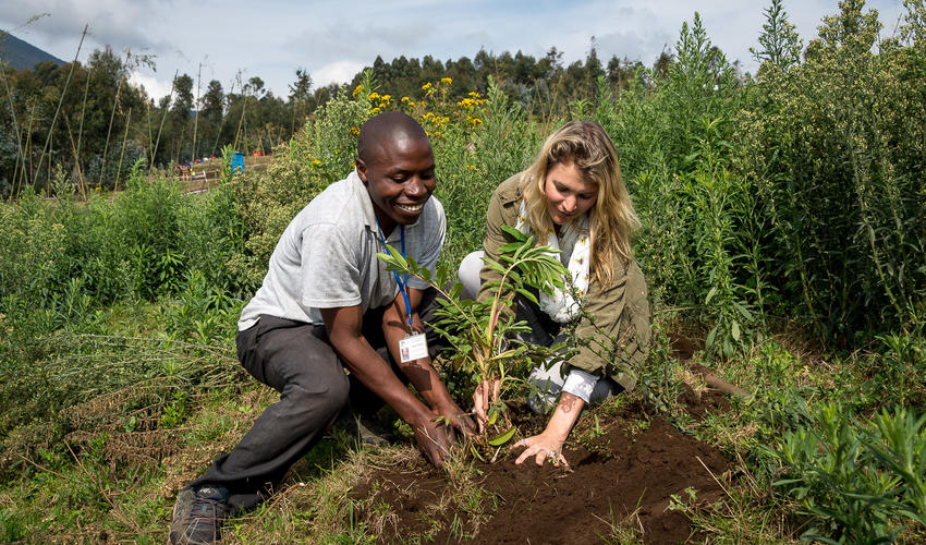 Every guest has the opportunity to contribute to Bisate's reforestation project