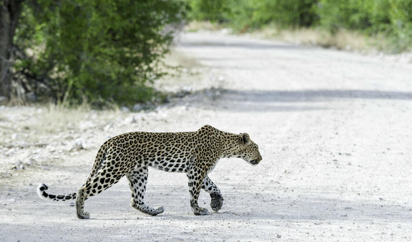 Wildlife experience at Onguma Tented Camp