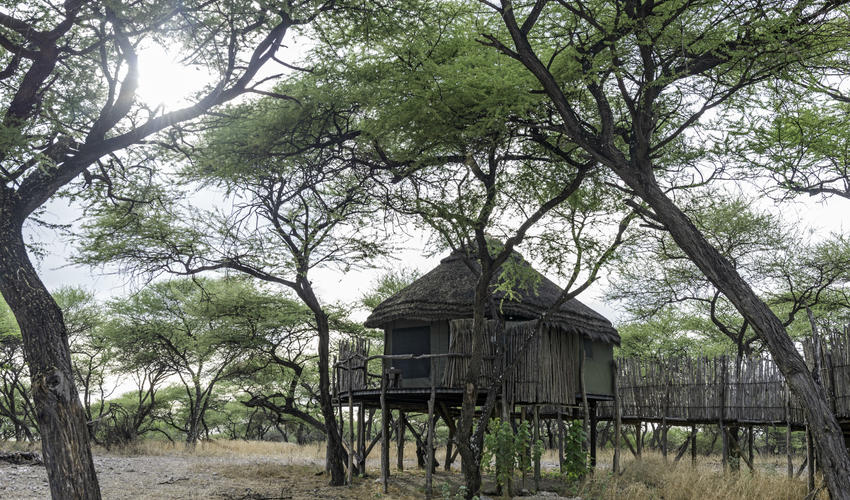 Stilted Tree house at Onguma Tree Top
