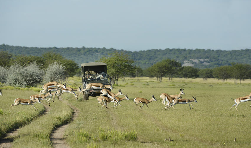 Wildlife experience on the private Ongava Game Reserve during green season
