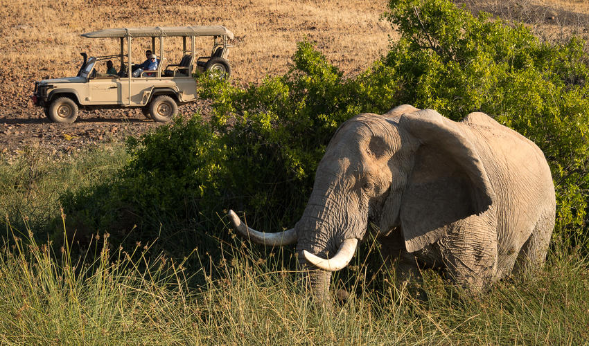 Elephant on a game drive