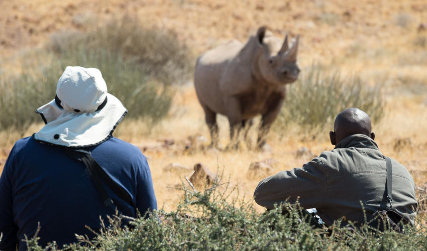 Black rhino tracking