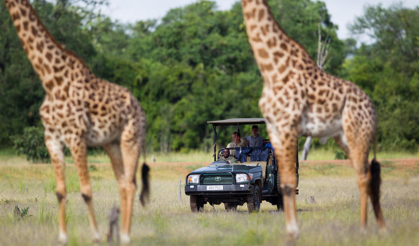 Explore the South Luangwa's game rich ecosystems