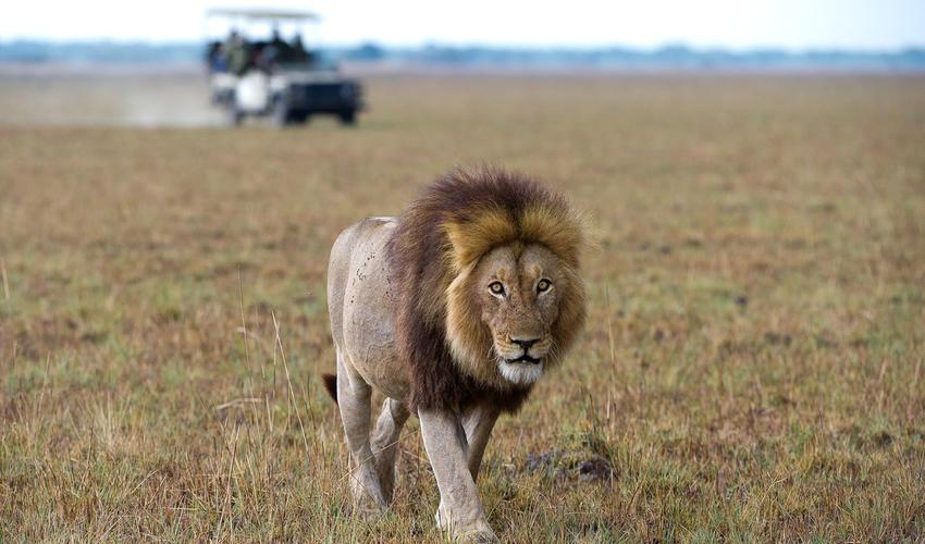 Lion stride