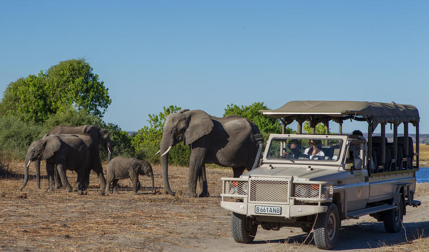 Exceptional game viewing in the Chobe National Park in 4WD open game drive vehicles